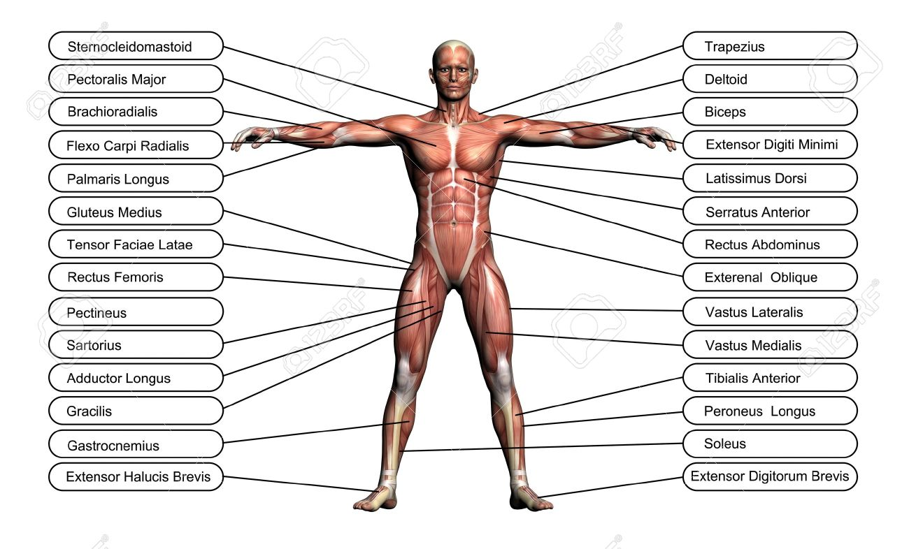 High Resolution Concept Or Conceptual 3d Human Anatomy And Muscle