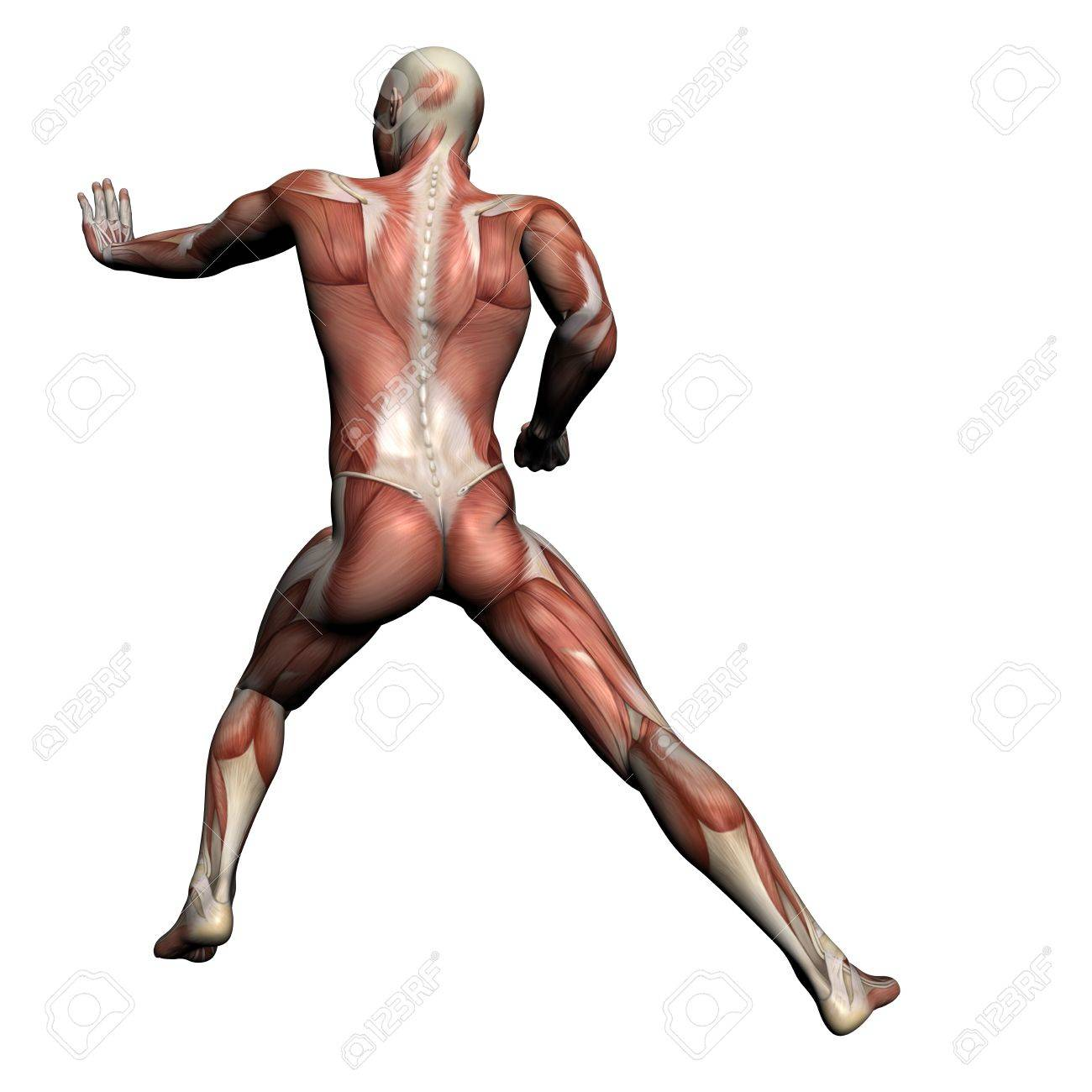 Human Anatomy - Male Muscles Made In 3d Software Stock Photo ...