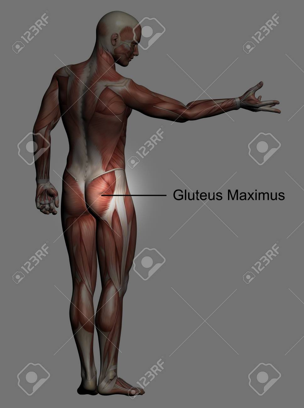 Increíble Masculinos Anatomía Fotos Imagen - Imágenes de Anatomía ...