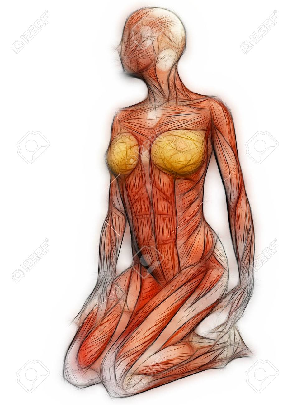 Human Anatomy - Female Muscles Made In 3d Software Stock Photo ...