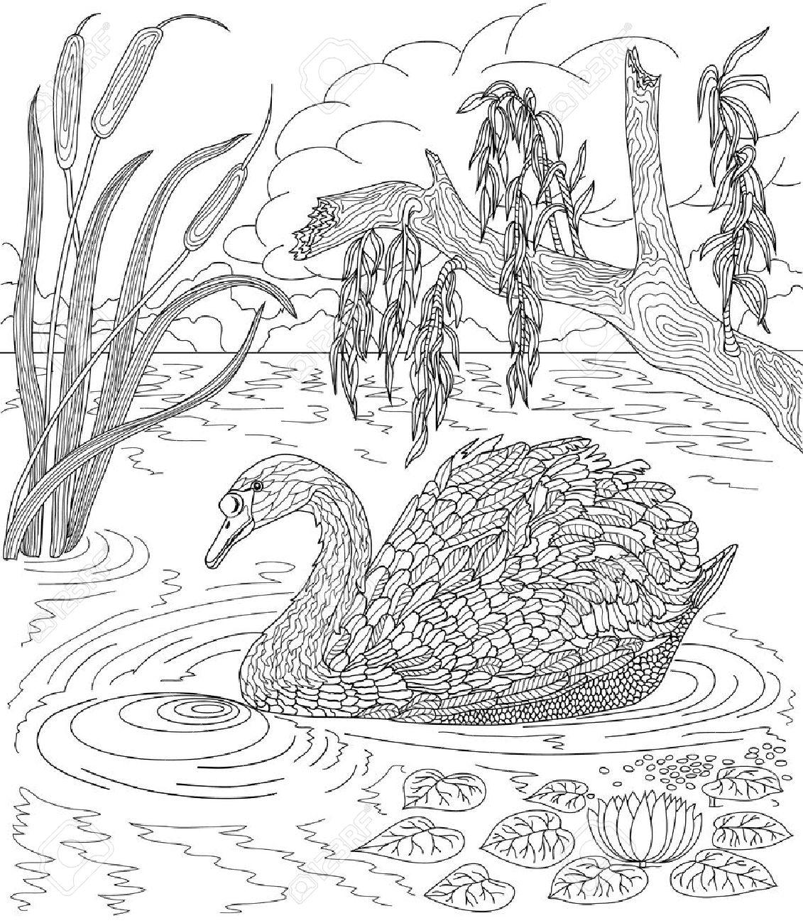 Dibujado A Mano Pájaro - Natación Del Cisne En Un Lago Con Las Cañas ...
