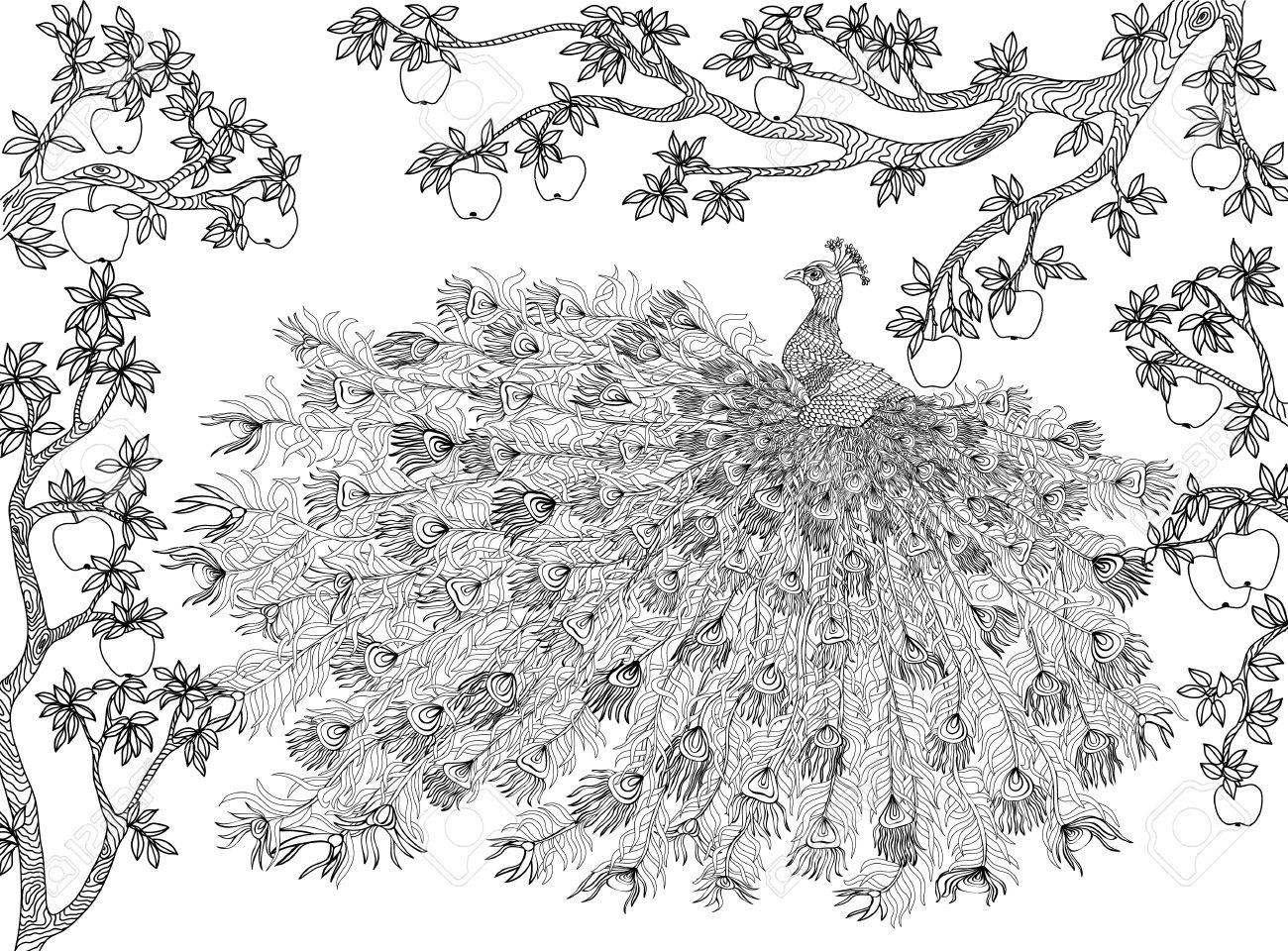Dibujado A Mano Pájaro - Pavo Real En Una Rama De árbol De Manzana ...