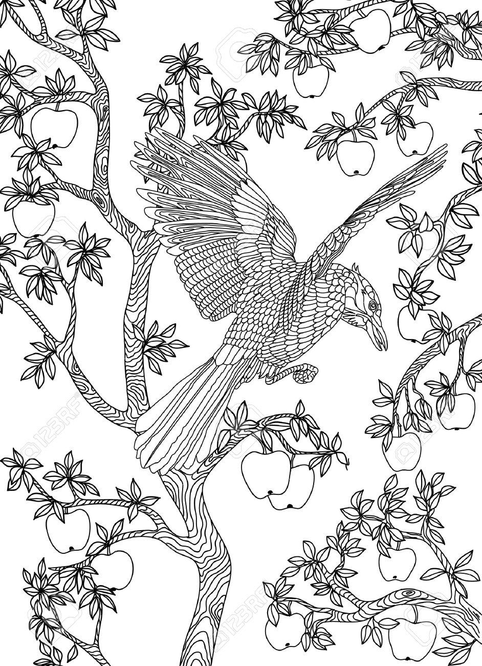 Dibujado A Mano Pájaro - Cuervo En Una Rama De árbol De Manzana ...