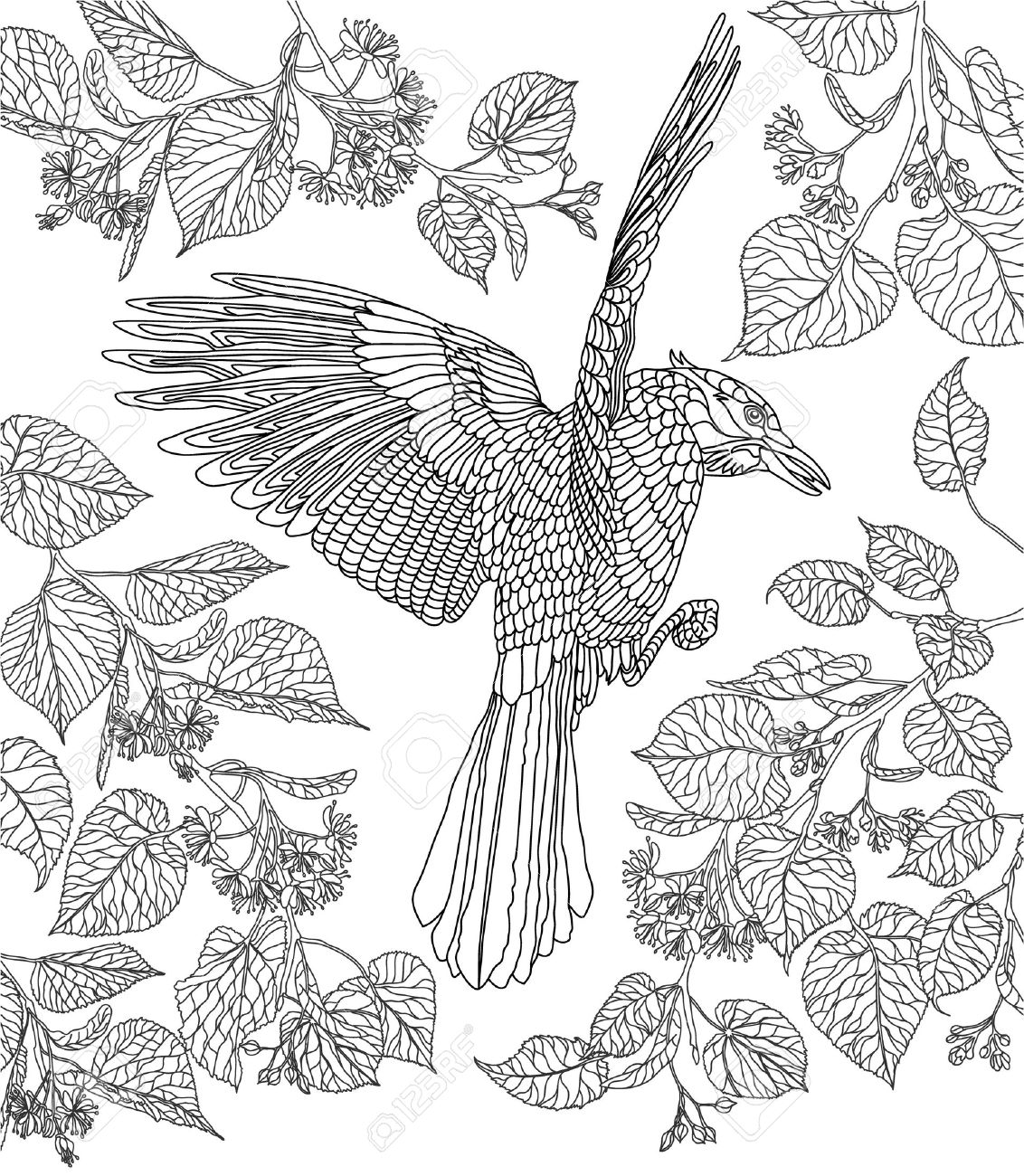 coloring page hand drawn bird crowned raven on a branch of a blossoming linden tree