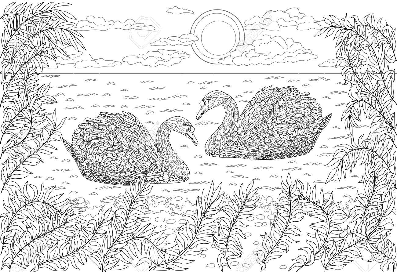 Hand drawn birds - Two swans swimming in a pond. Coloring page..