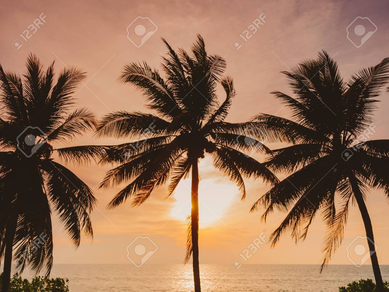 Coconut Tree Sunset Beach Vacation Outdoor Summer holiday Background - 145682258