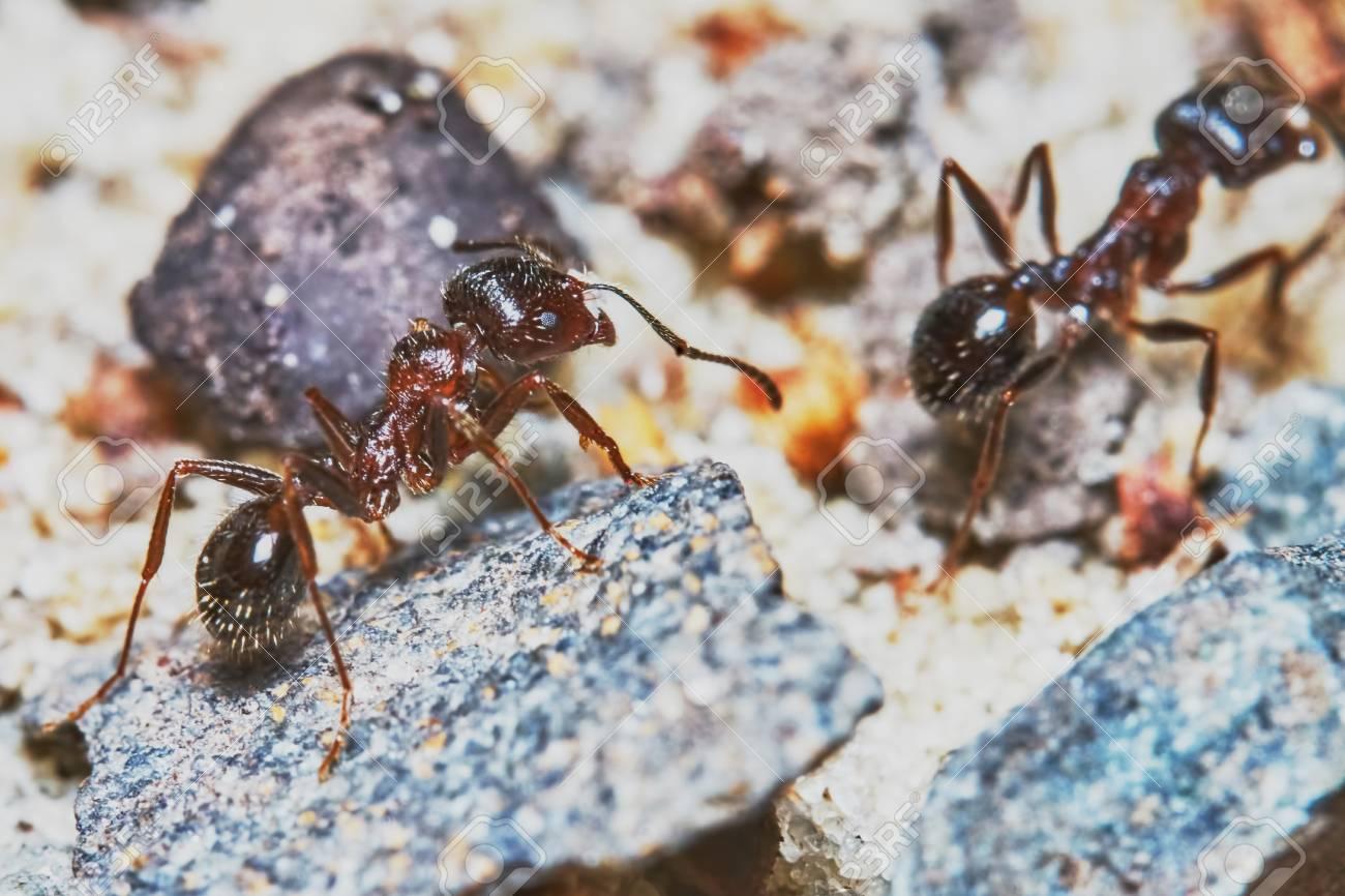 Dos Hormigas En El Jardín Close-up Fotos, Retratos, Imágenes Y ...