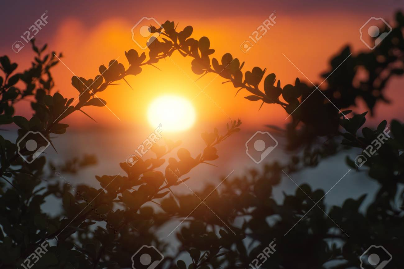 Composition of tree branches in shape of roof with setting sun