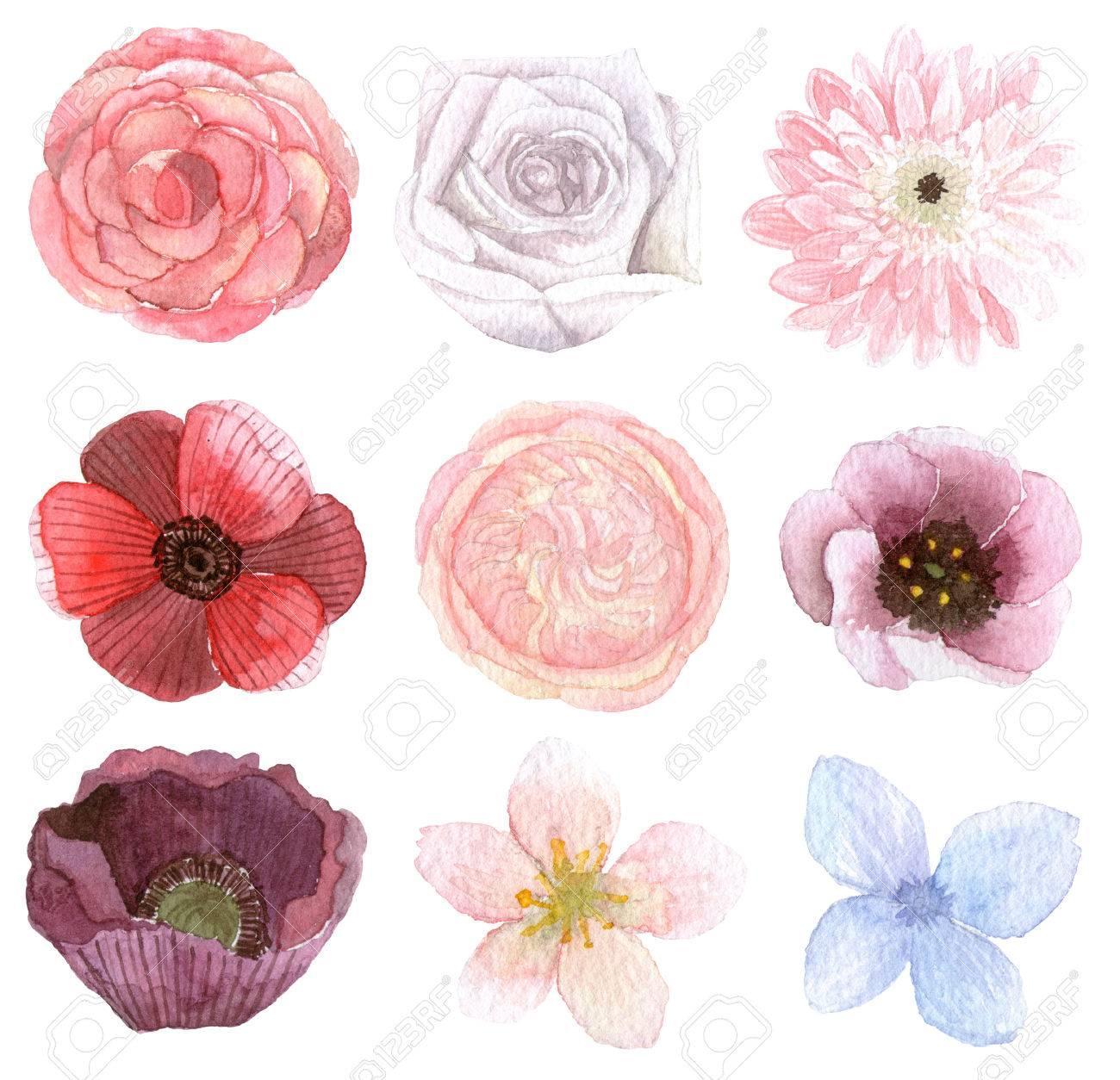 Ensemble De Variété De Fleurs Dessin Traditionnel Et La Peinture à Leau Couleur Sur Fond Blanc