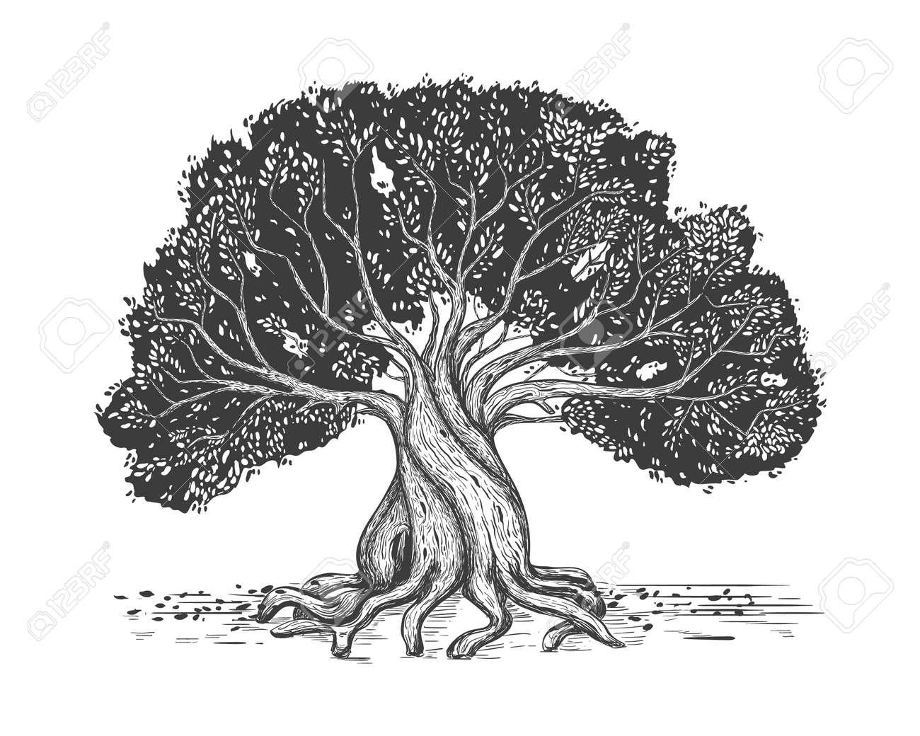Family tree hand drawn sketch print. Genealogical tree. Stylized old olive tree. - 165239157