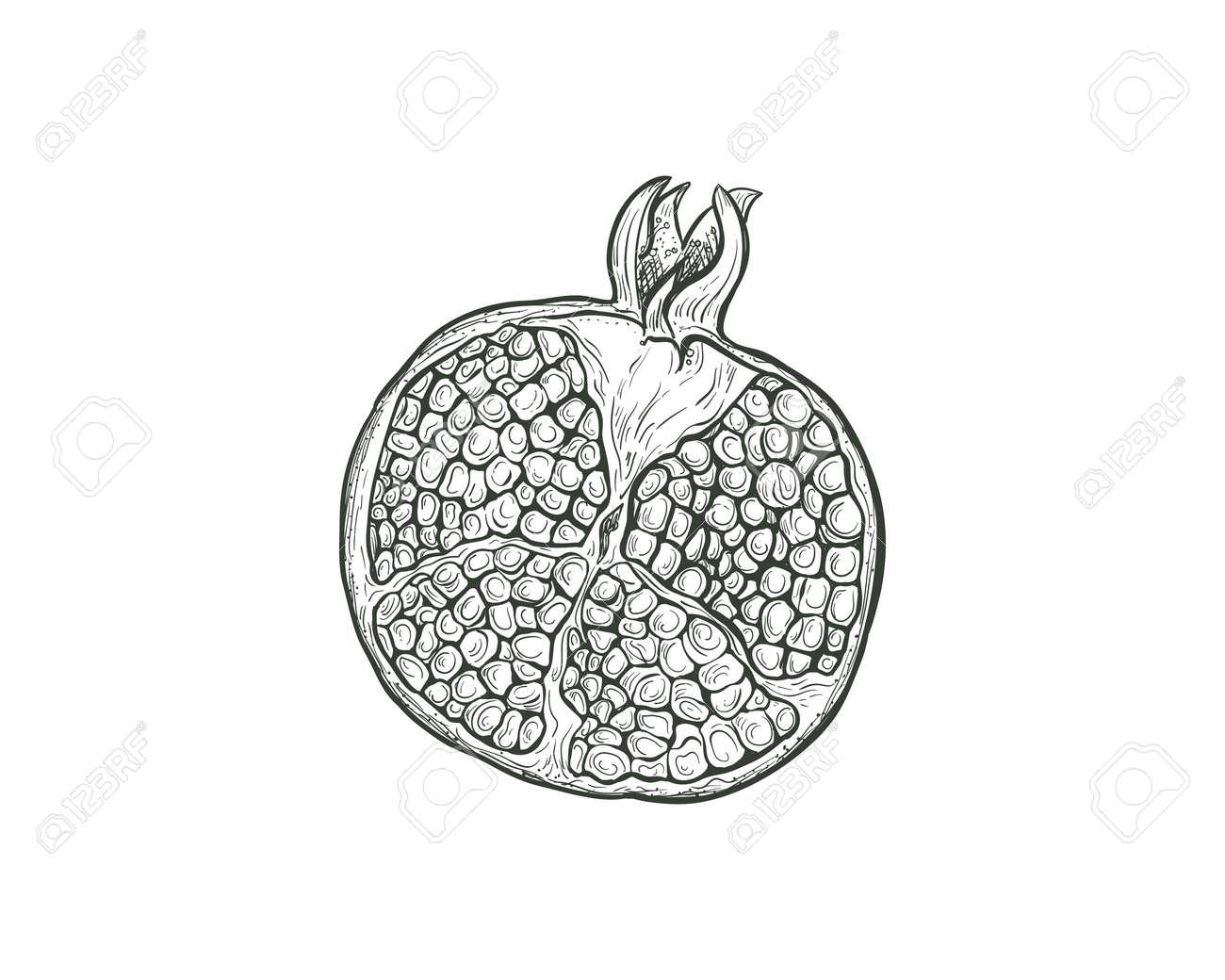 Sketch Pomegranate fruit cutaway, pomegranate seeds, isolated engraved sign. Garnet fruit vector sketch illustration. - 167184435