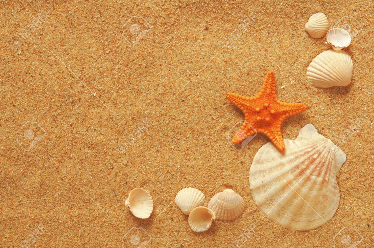 vacation memories from the beach, seafish and shell Stock Photo - 13238908