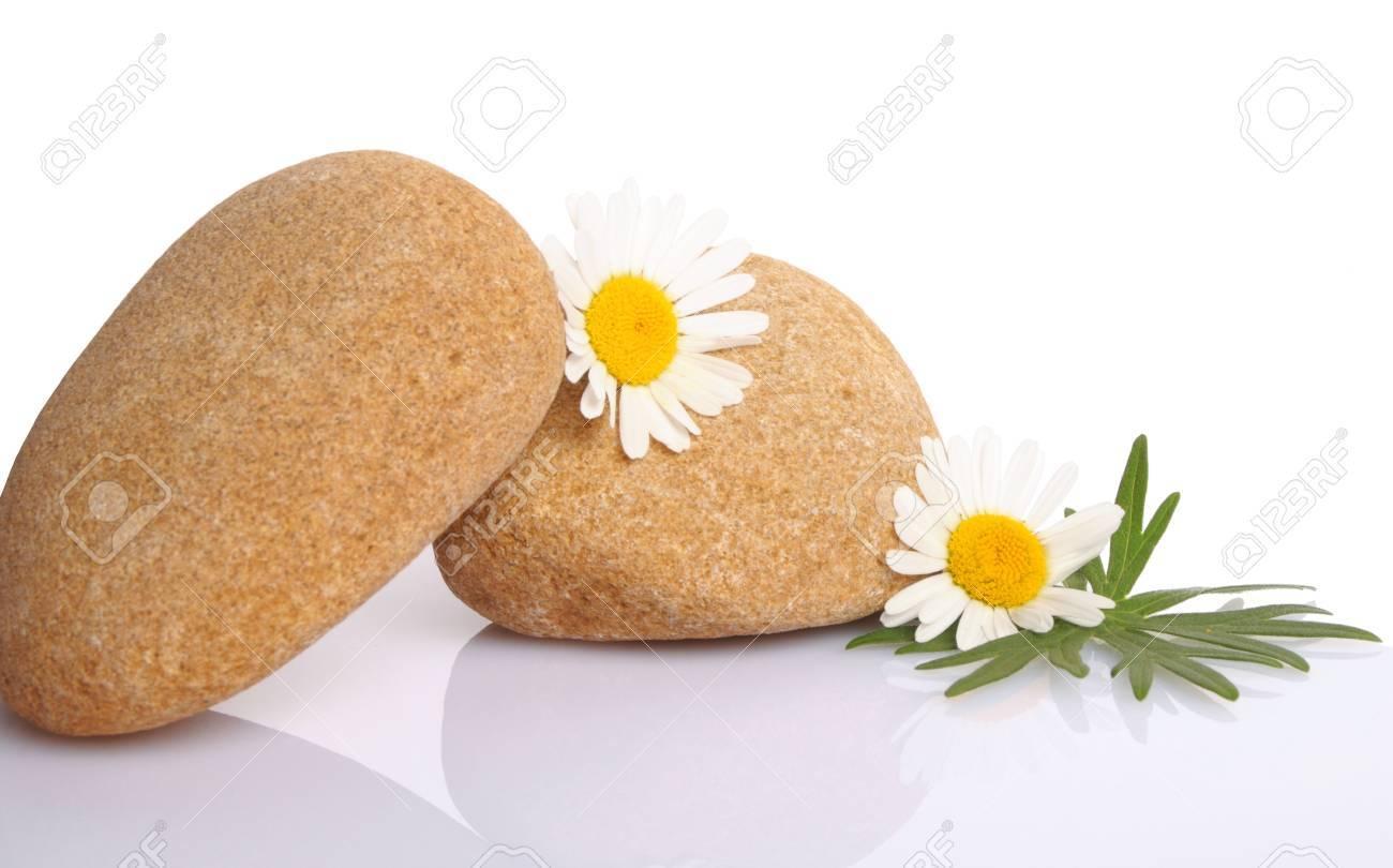 set of flowers on stone on white background Stock Photo - 15541869