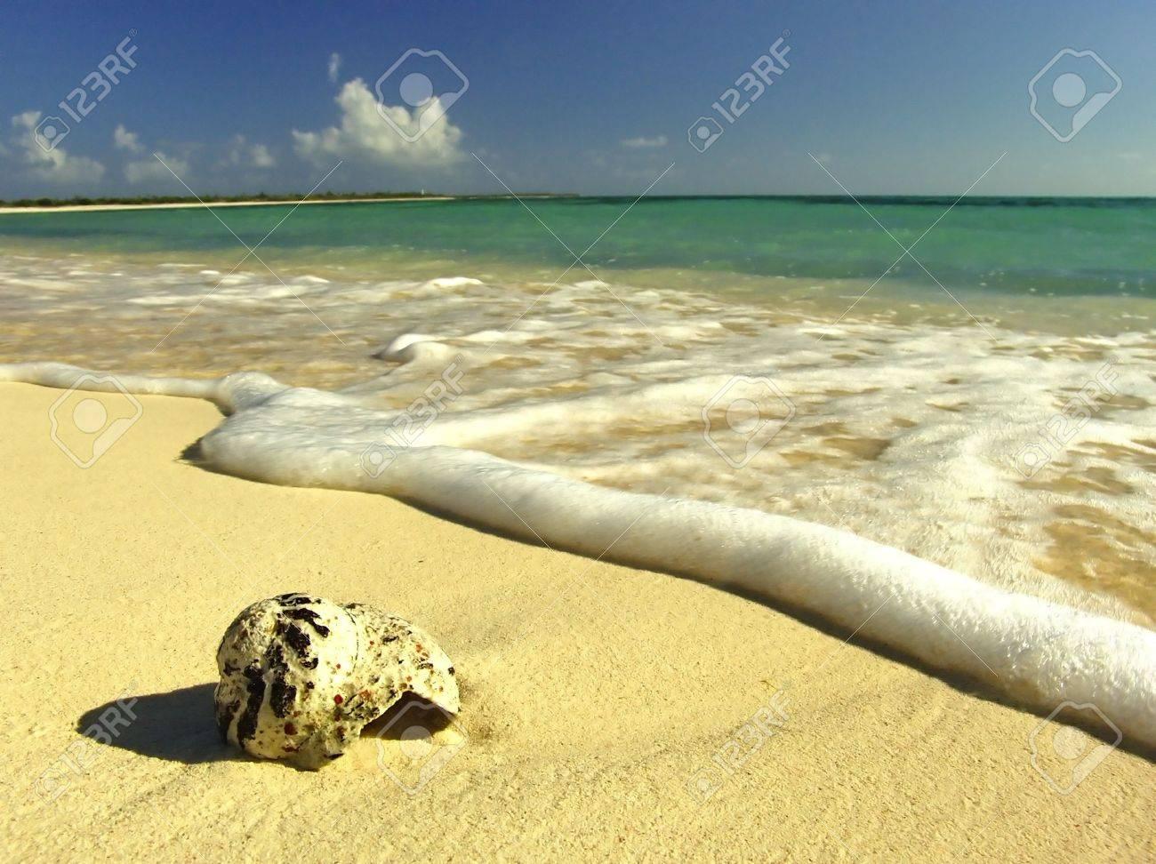 Idyllic virgin sand beach on Caribbean Sea, Mexico, Cozumel - 2676194