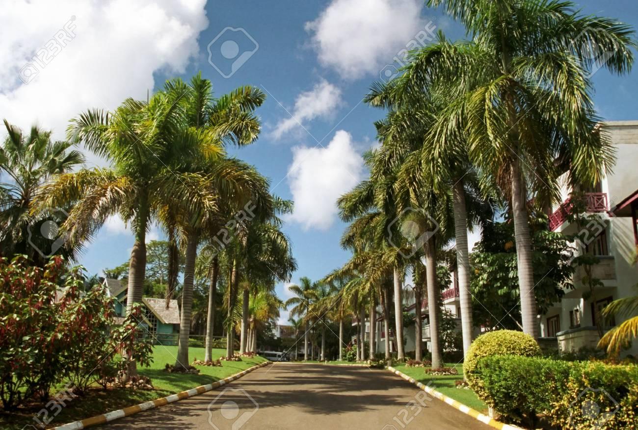 Tropical Paradise - 2706347
