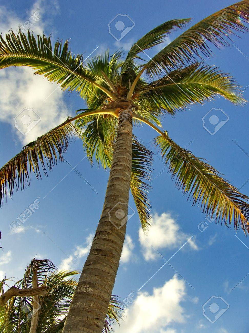 Coconut Palm Tree with Blue Sky Background - 2933276