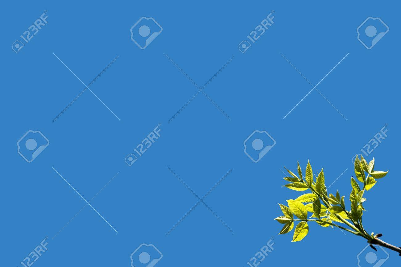 First green leaves on blue sky background. Spring time. - 5426402