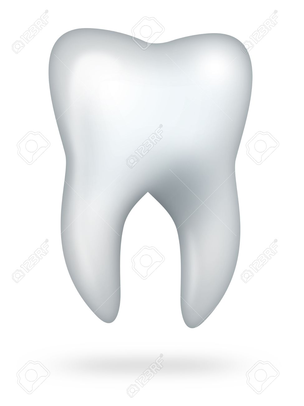 molar teeth