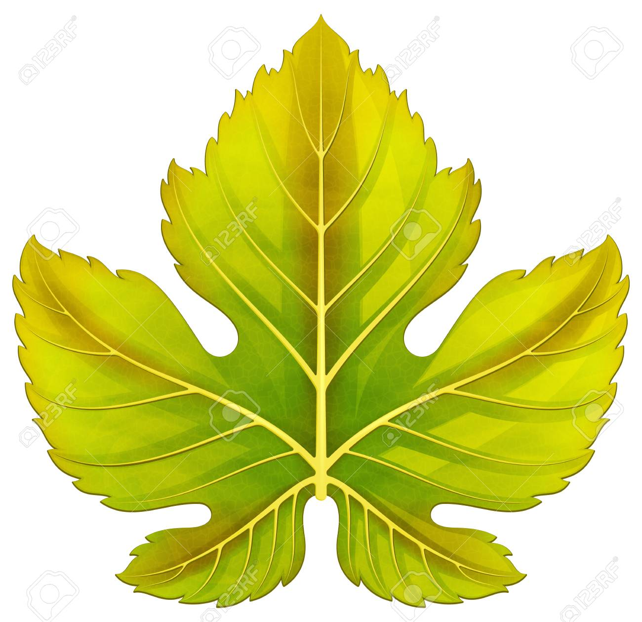Grape Leaf Vector Illustration Royalty Free Cliparts Vectors And Stock Illustration Image 98295859