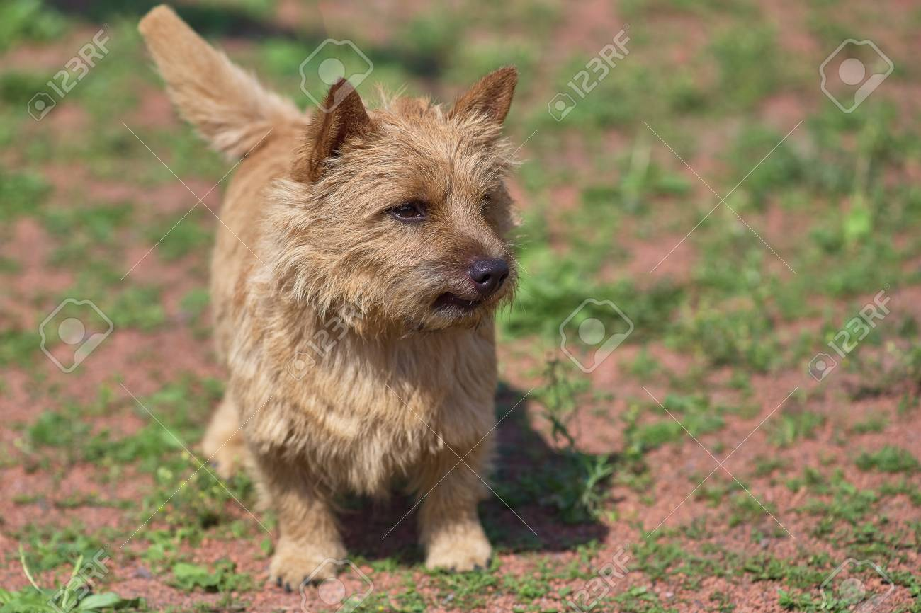 Terrier Standing in the rack  Space under the text  Concept: