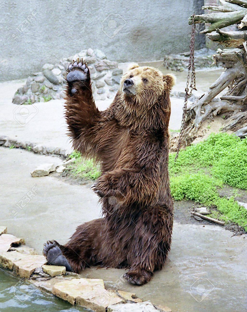 Bear - 468502