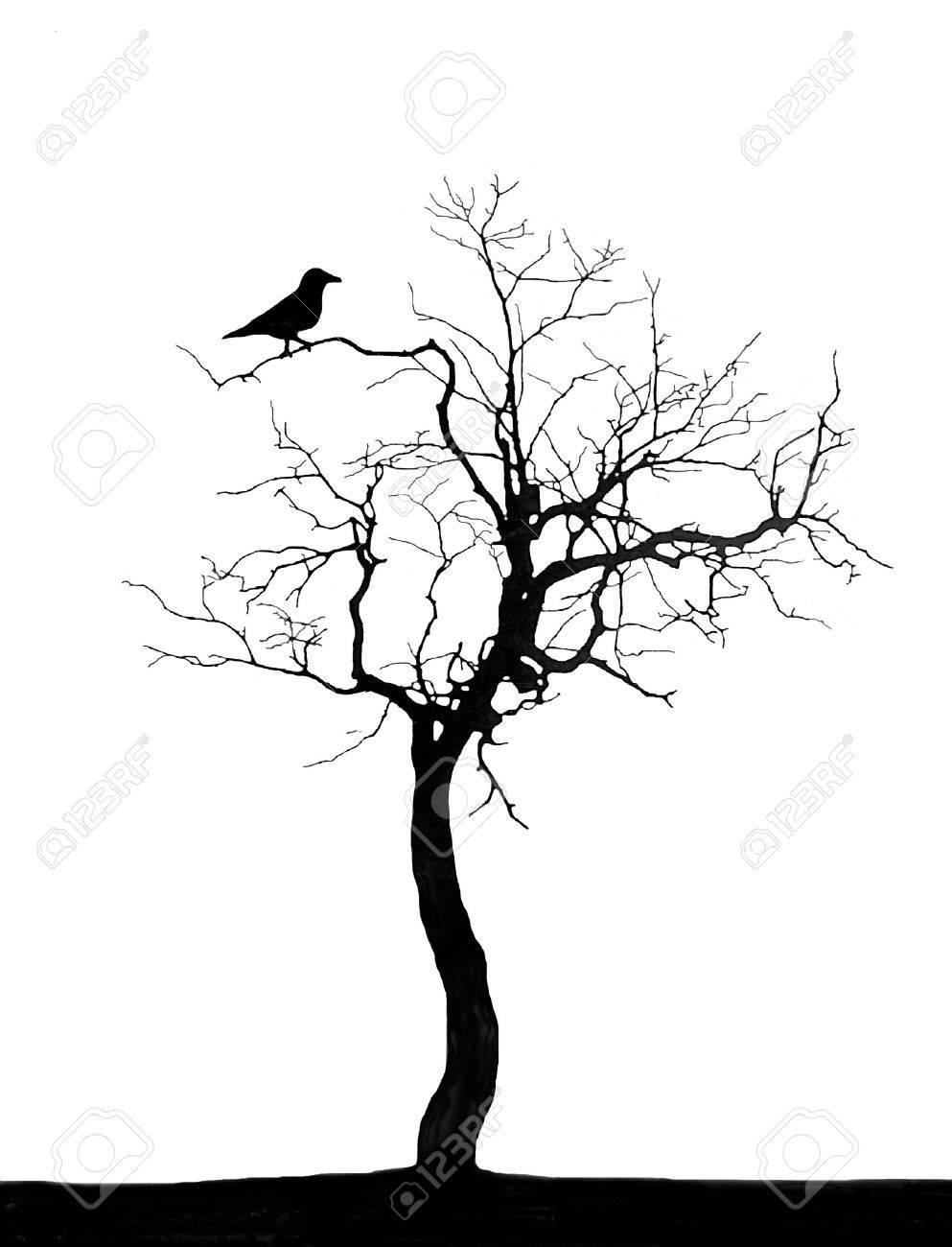 Dead tree - 2727019