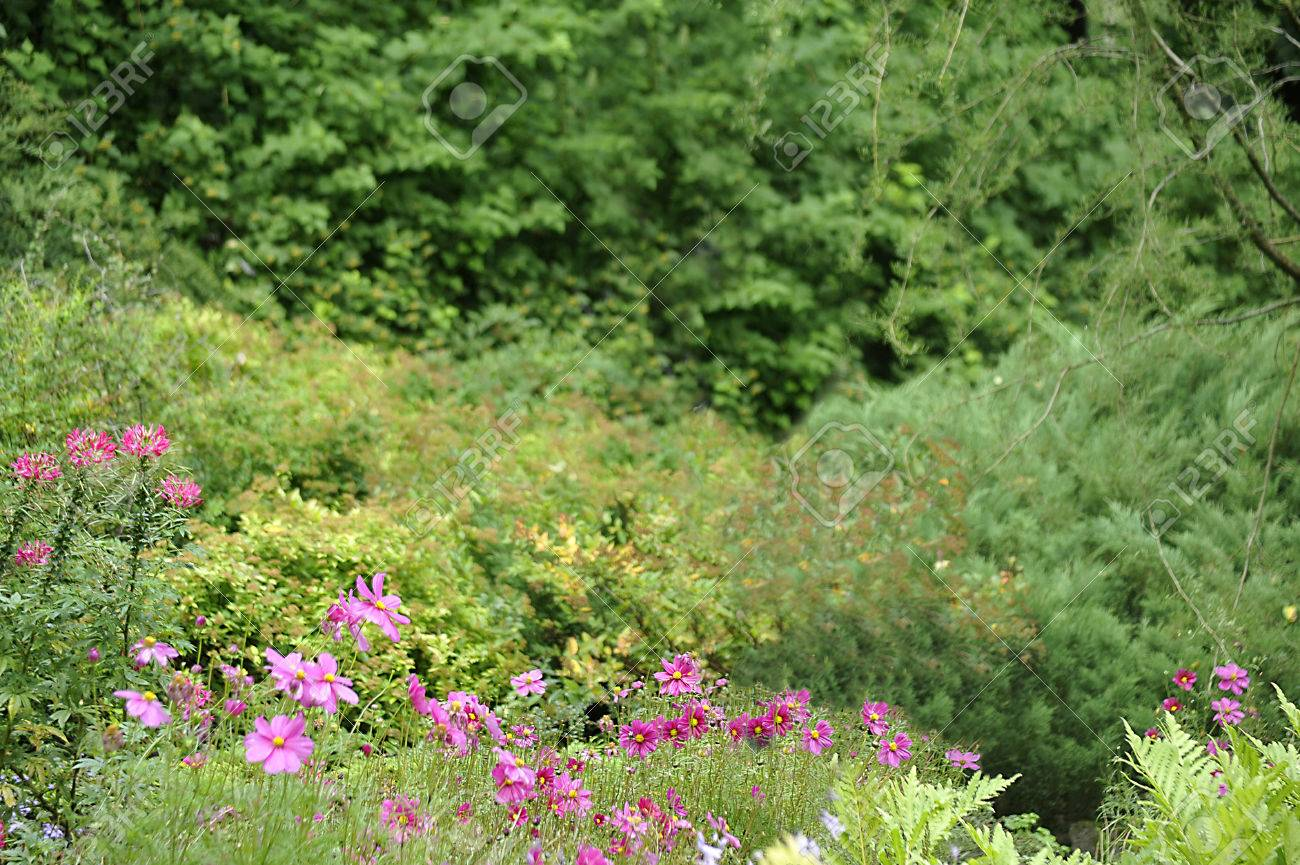 Green background for designers with flowers in the foreground. - 50957411