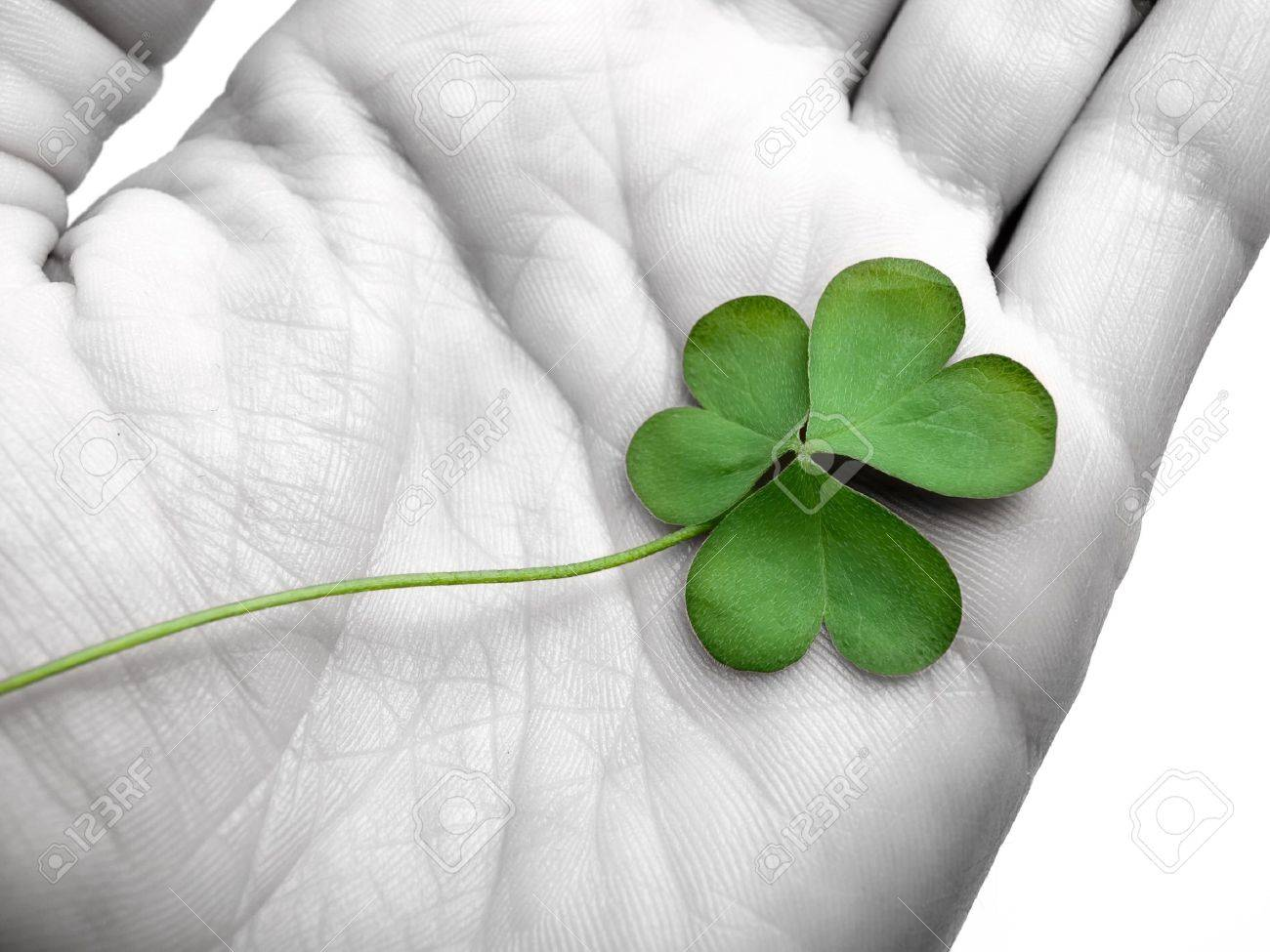 clover in the hand , can be used as concept for luck related themes, selective desaturation Stock Photo - 8257652