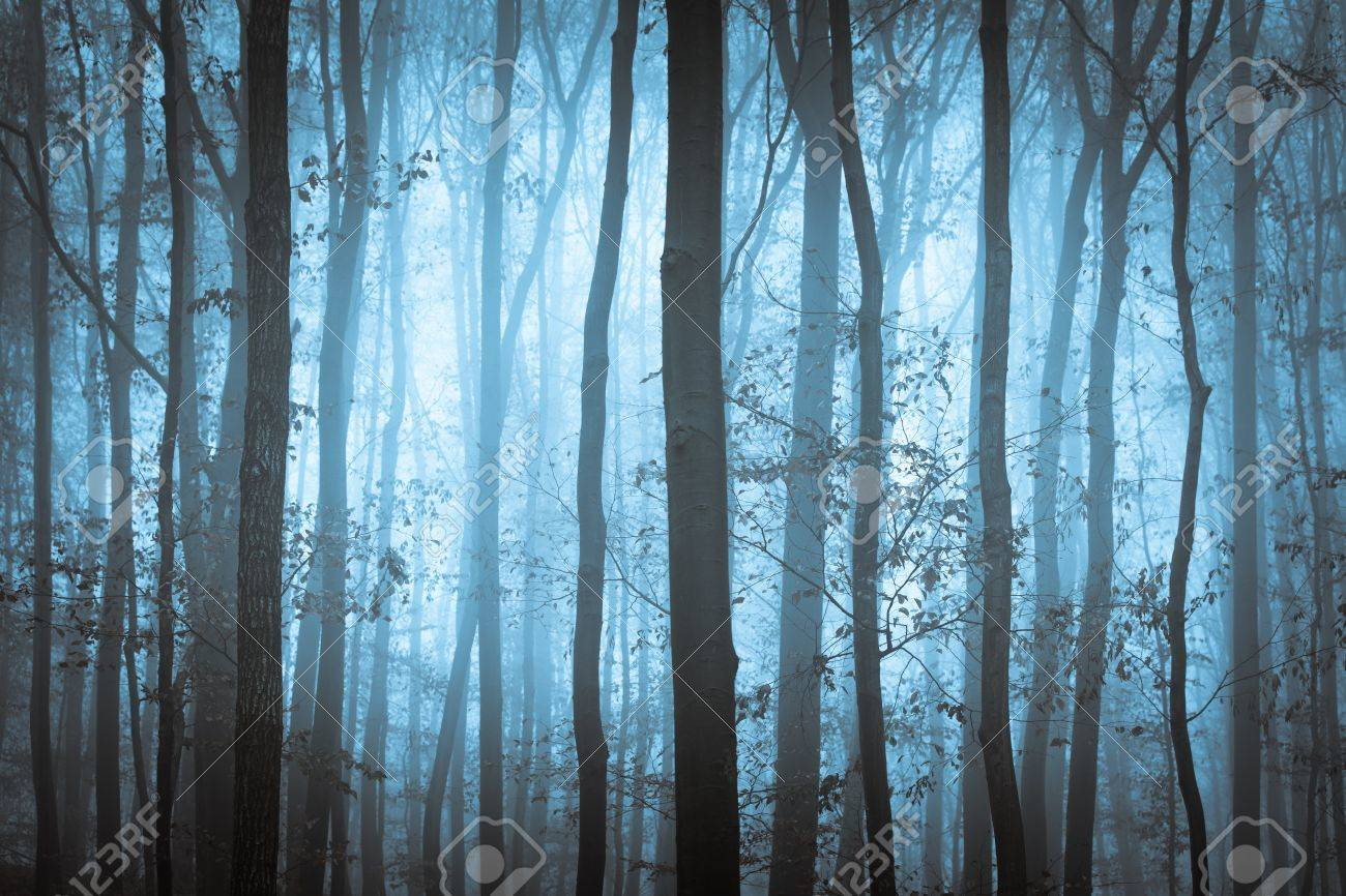 Dark blue spooky forrest with trees in fog Stock Photo - 14747886
