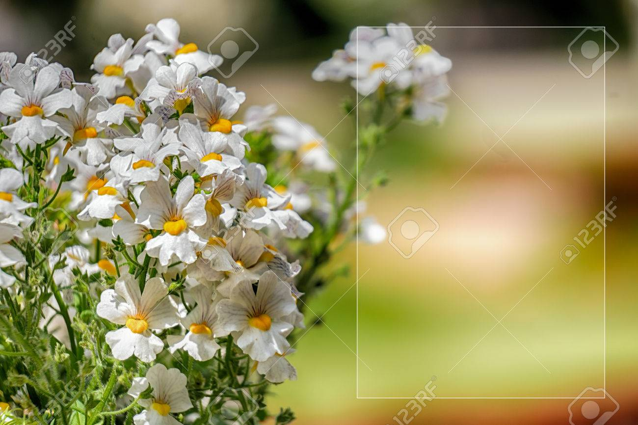 Template with flowers for a greeting card calendar stock photo template with flowers for a greeting card calendar stock photo 81153777 kristyandbryce Images