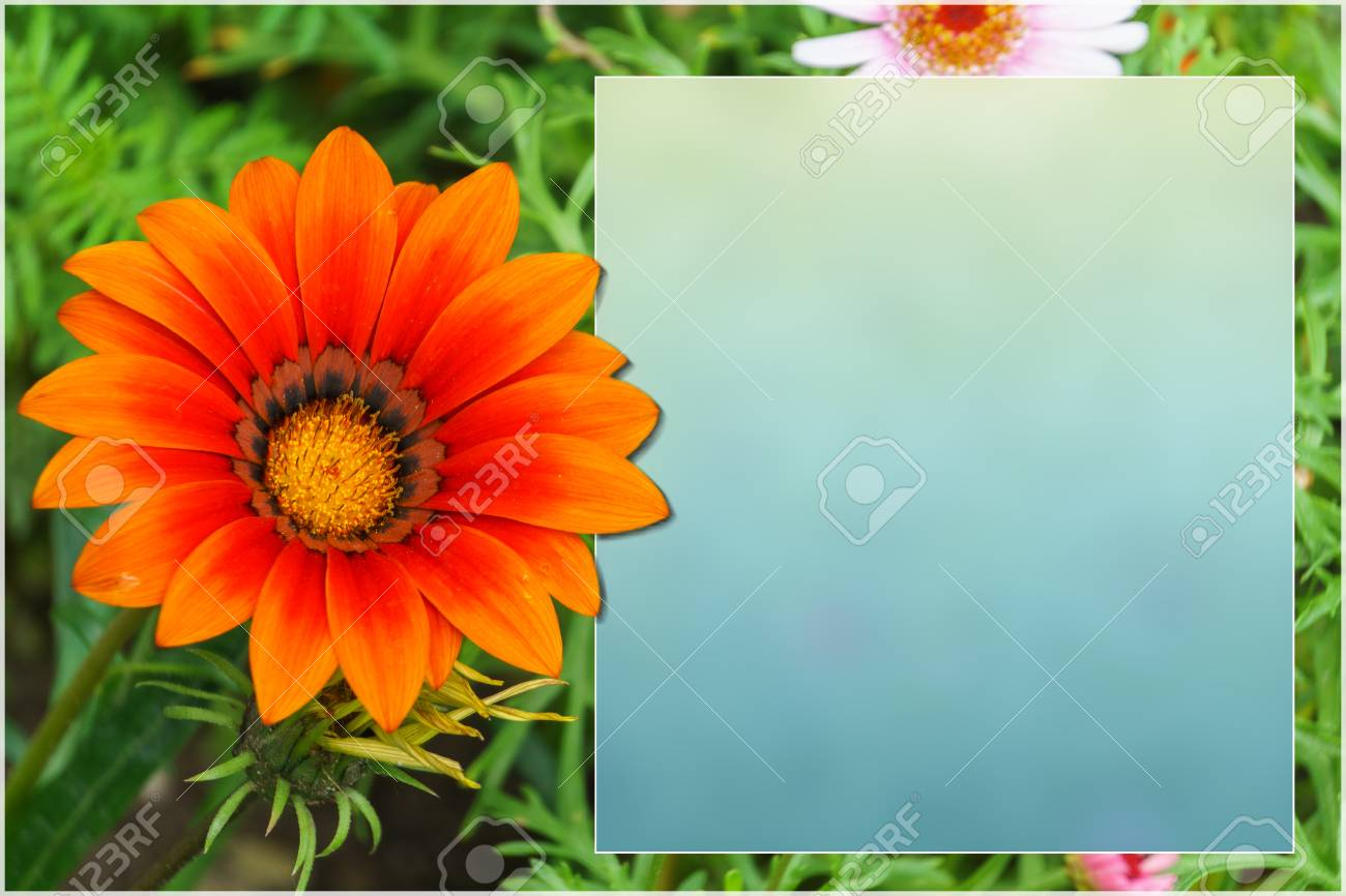 Template with flowers for a greeting card calendar stock photo template with flowers for a greeting card calendar stock photo 81354614 kristyandbryce Images