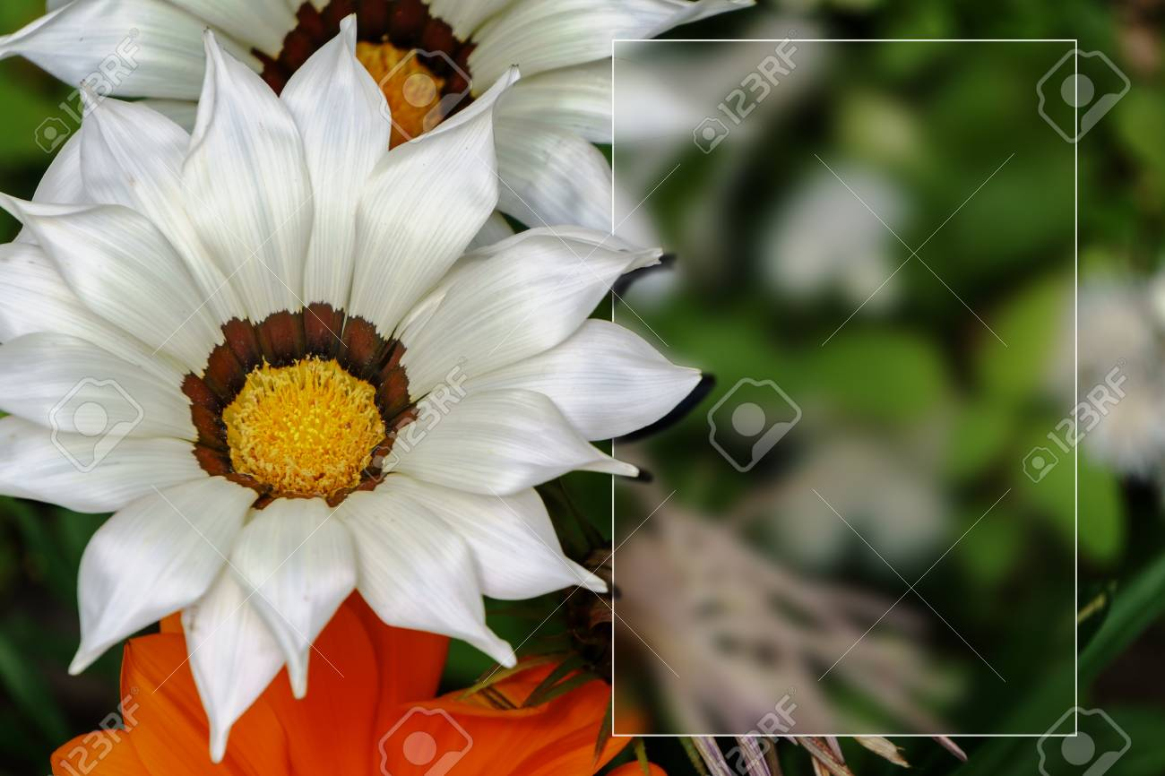 Template with flowers for a greeting card calendar stock photo template with flowers for a greeting card calendar stock photo 81488949 kristyandbryce Images