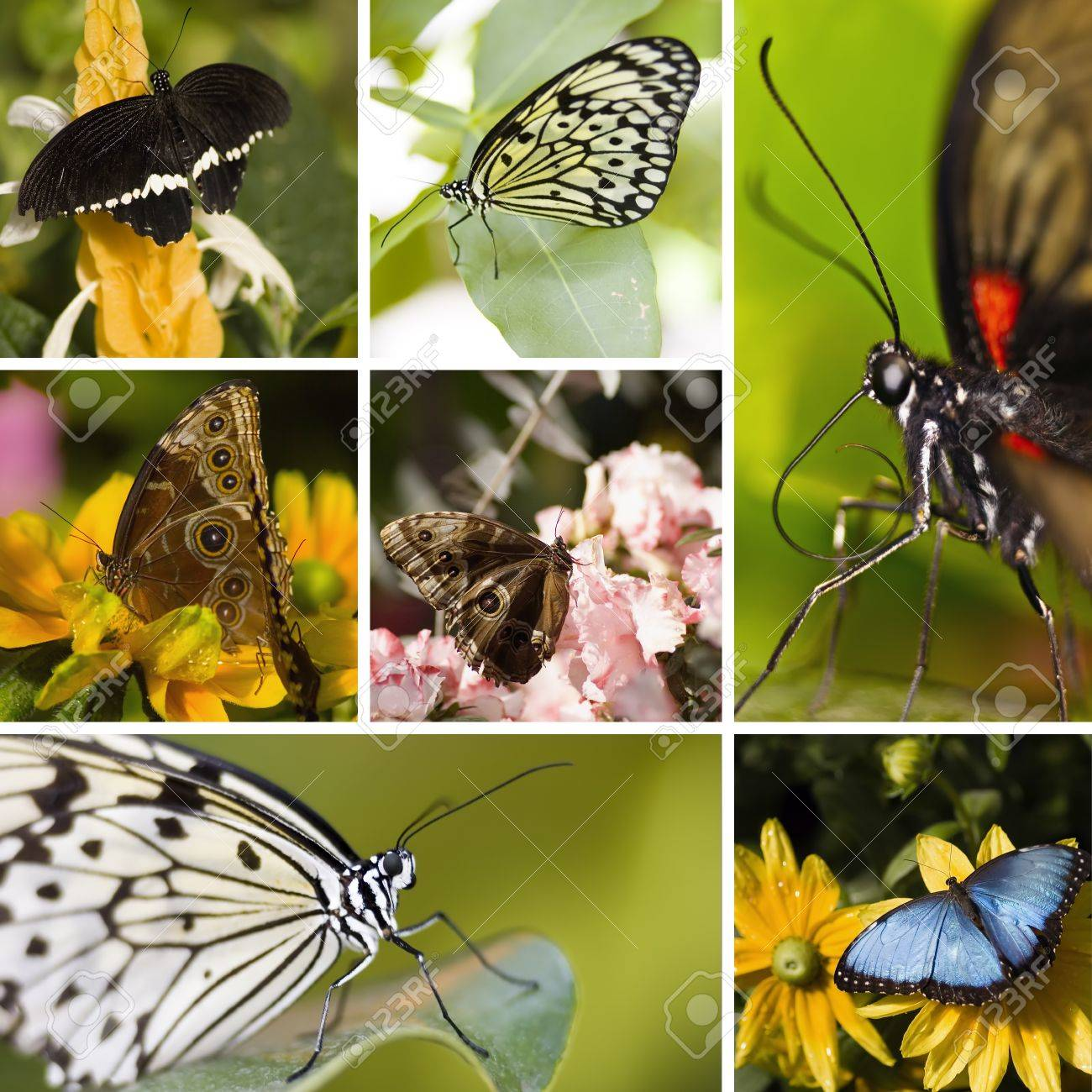 Collage of seven different butterflies in the same picture Stock Photo - 13638254