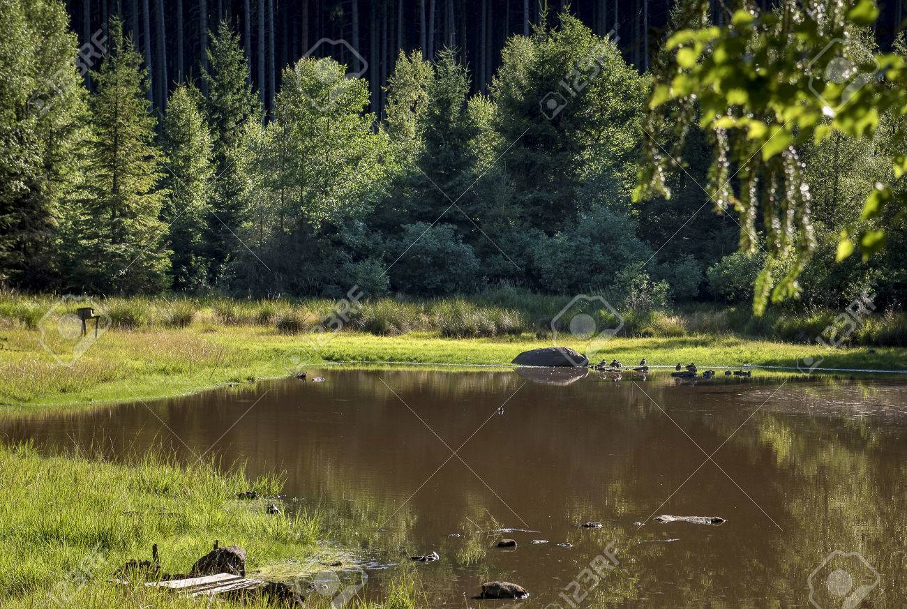 A Small Pond In The Middle Of A Forest With Wild Birds Stock Photo, Picture  And Royalty Free Image. Image 83864947.