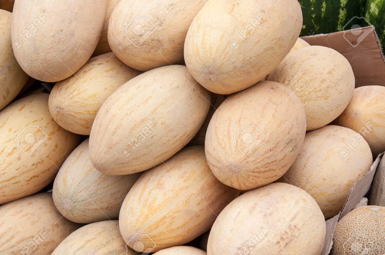 方 瓜 の 育て
