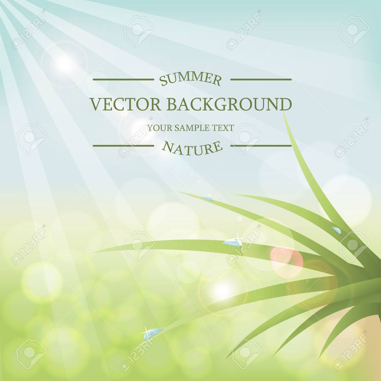 Vector summer background with sunlight. Green grass with dew drops - 54141553