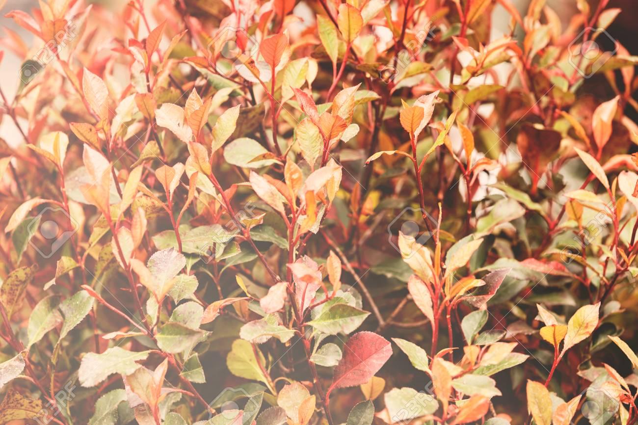 Pianta Foglie Rosse E Verdi foglie rosse e verdi sulle piante, nota la profondità di campo