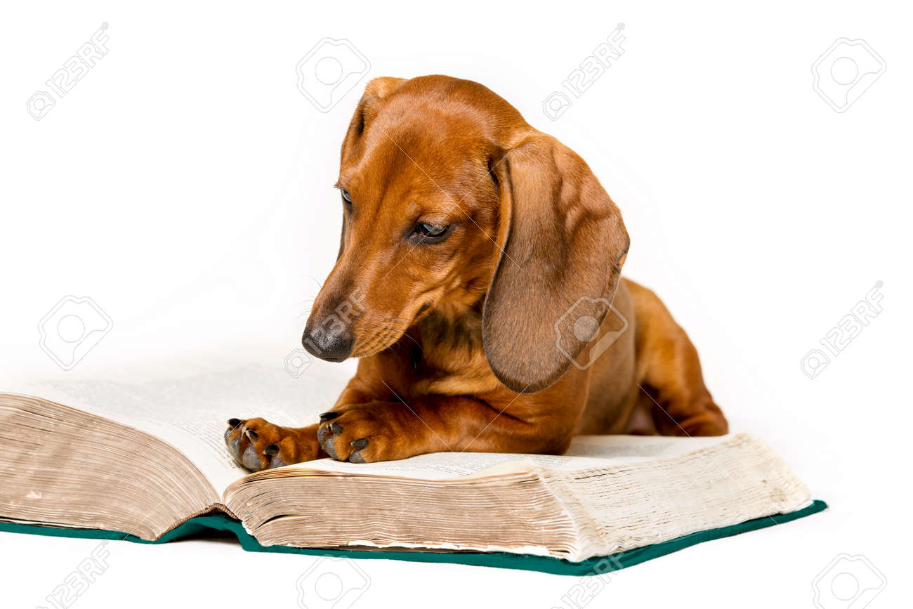 Dog Brain Stock Photos. Royalty Free Dog Brain Images