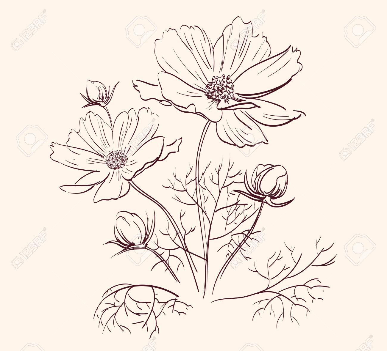 Flower garden sketch - Beautiful Garden Flower Sketch Stock Ilration 248500798