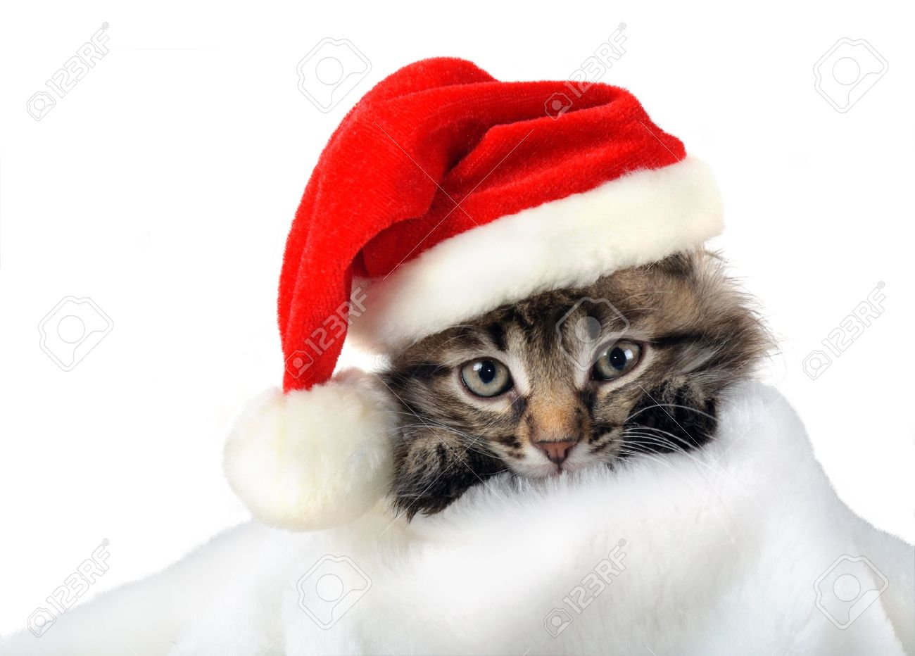 Christmas Kitten In Santa Stocking Hat And Scarf Isolated Stock ...