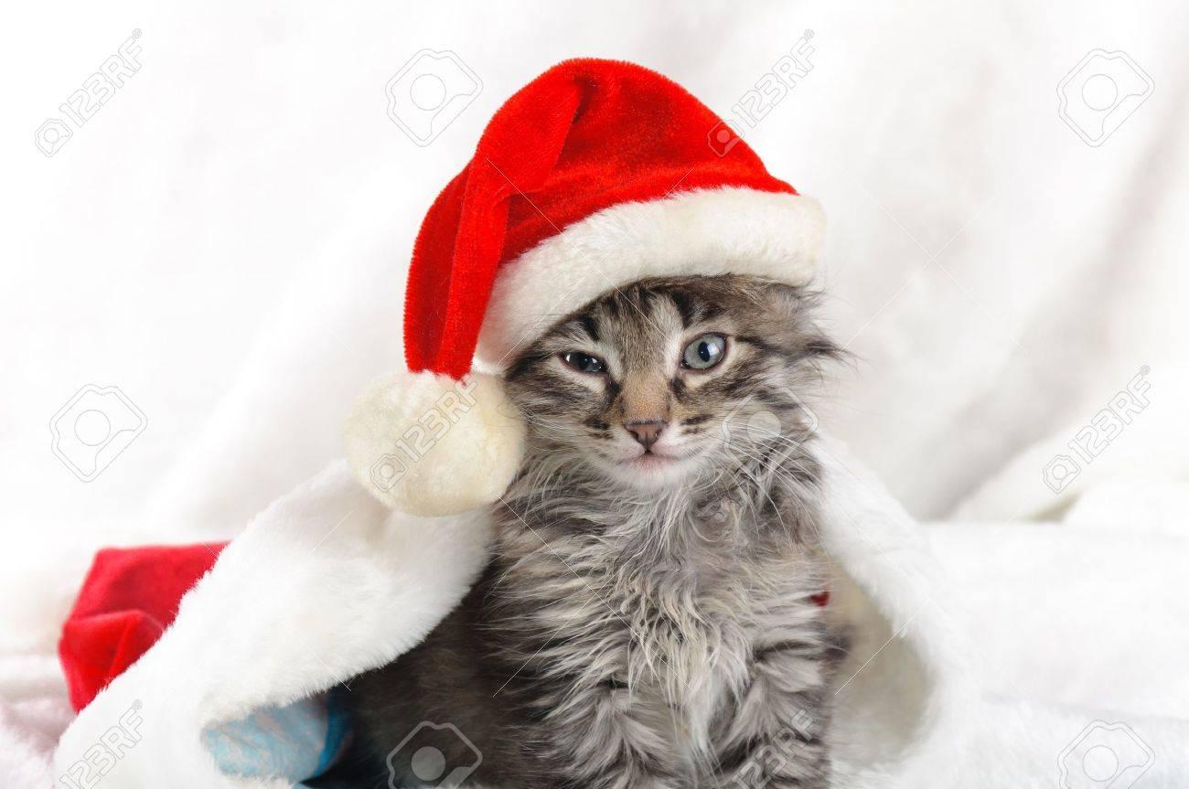 Christmas kitten Stock Photo - 16383703