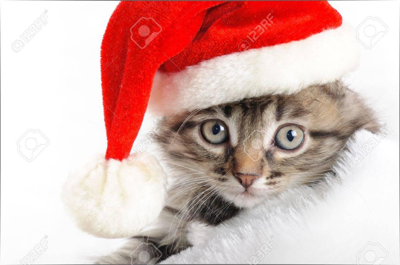 Christmas kitten Stock Photo - 16383704