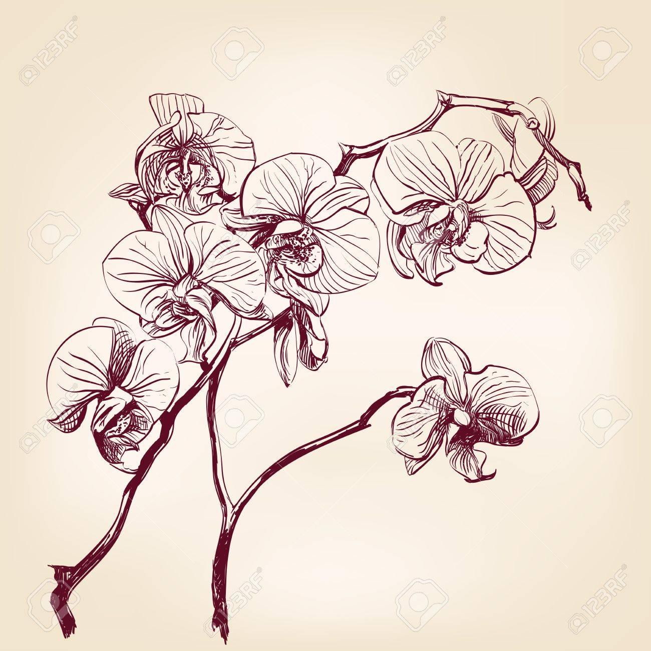 Foto de archivo , mano floral orquídea dibujado