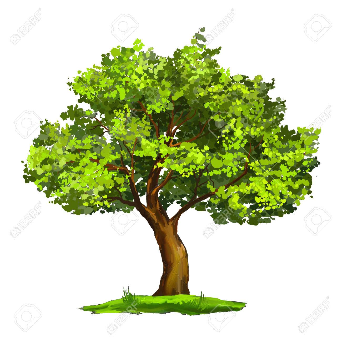 Tree vector illustration hand drawn painted watercolor - 37931790
