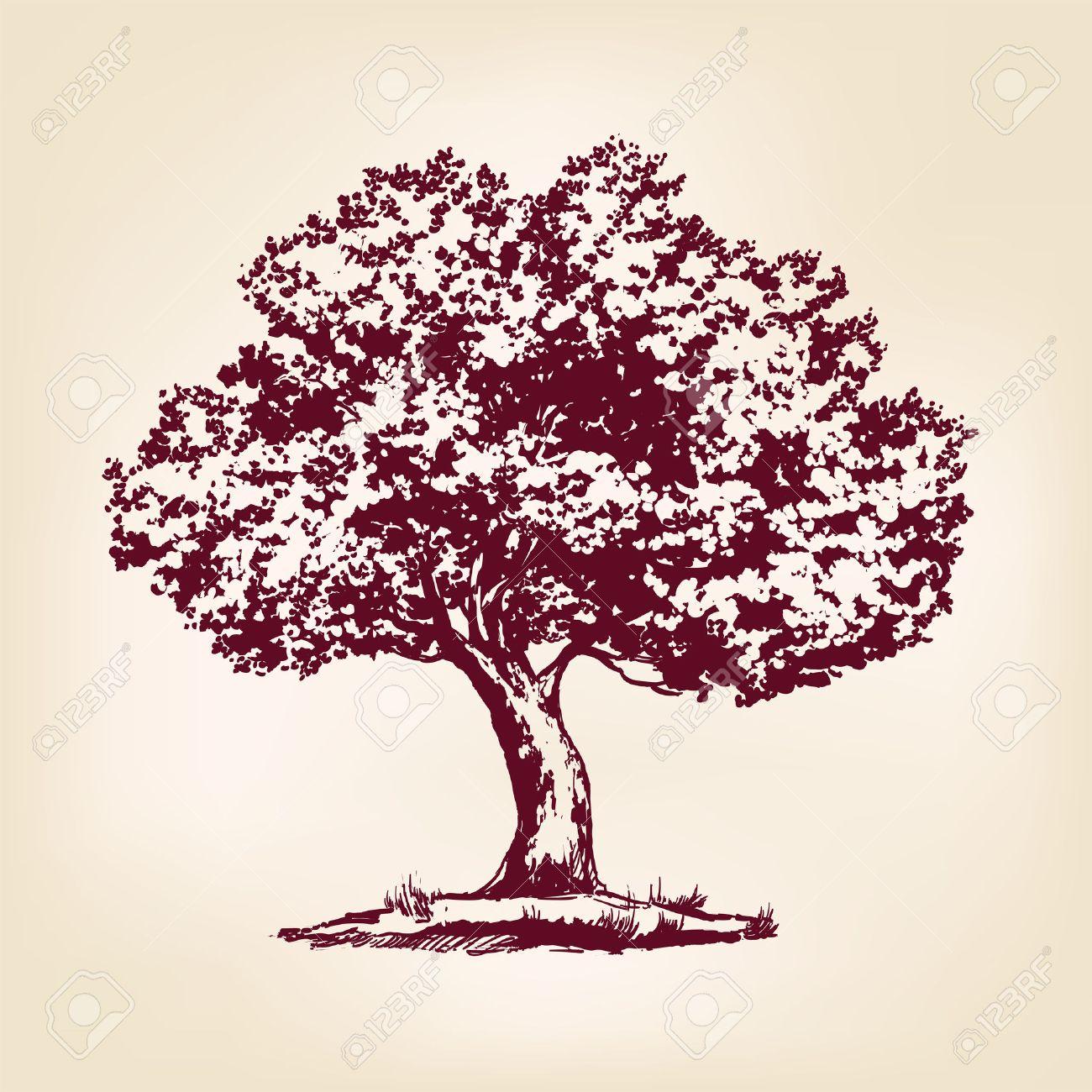 Tree hand drawn vector llustration realistic sketch Stock Vector - 42442574