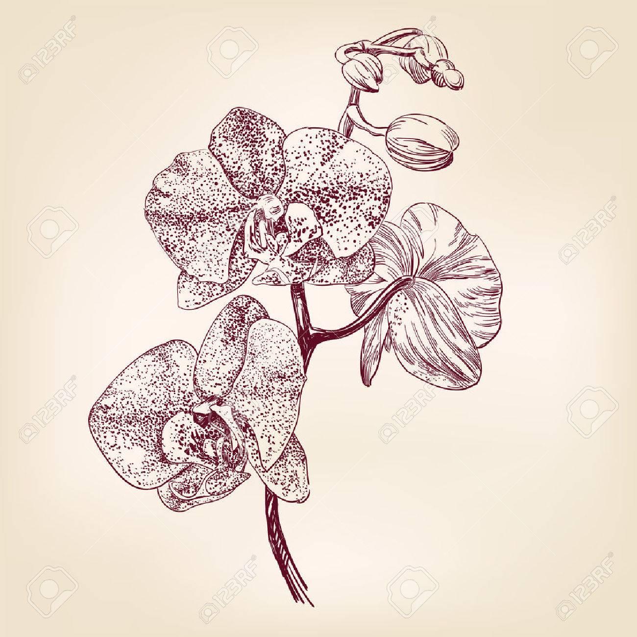 Ilustracion Dibujados A Mano Dibujo Realista De Flores De Orquideas