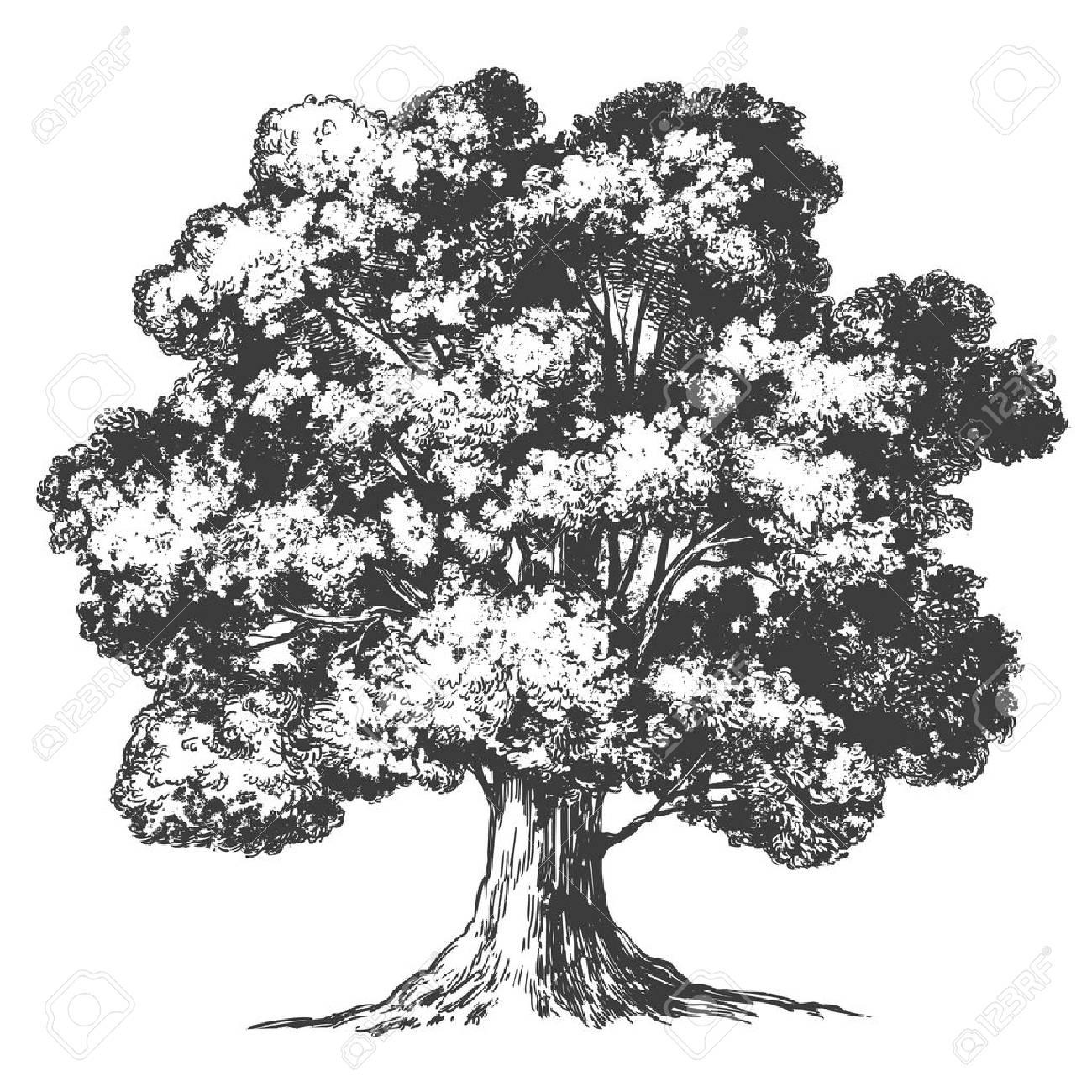 Tree hand drawn vector illustration realistic sketch - 97502894