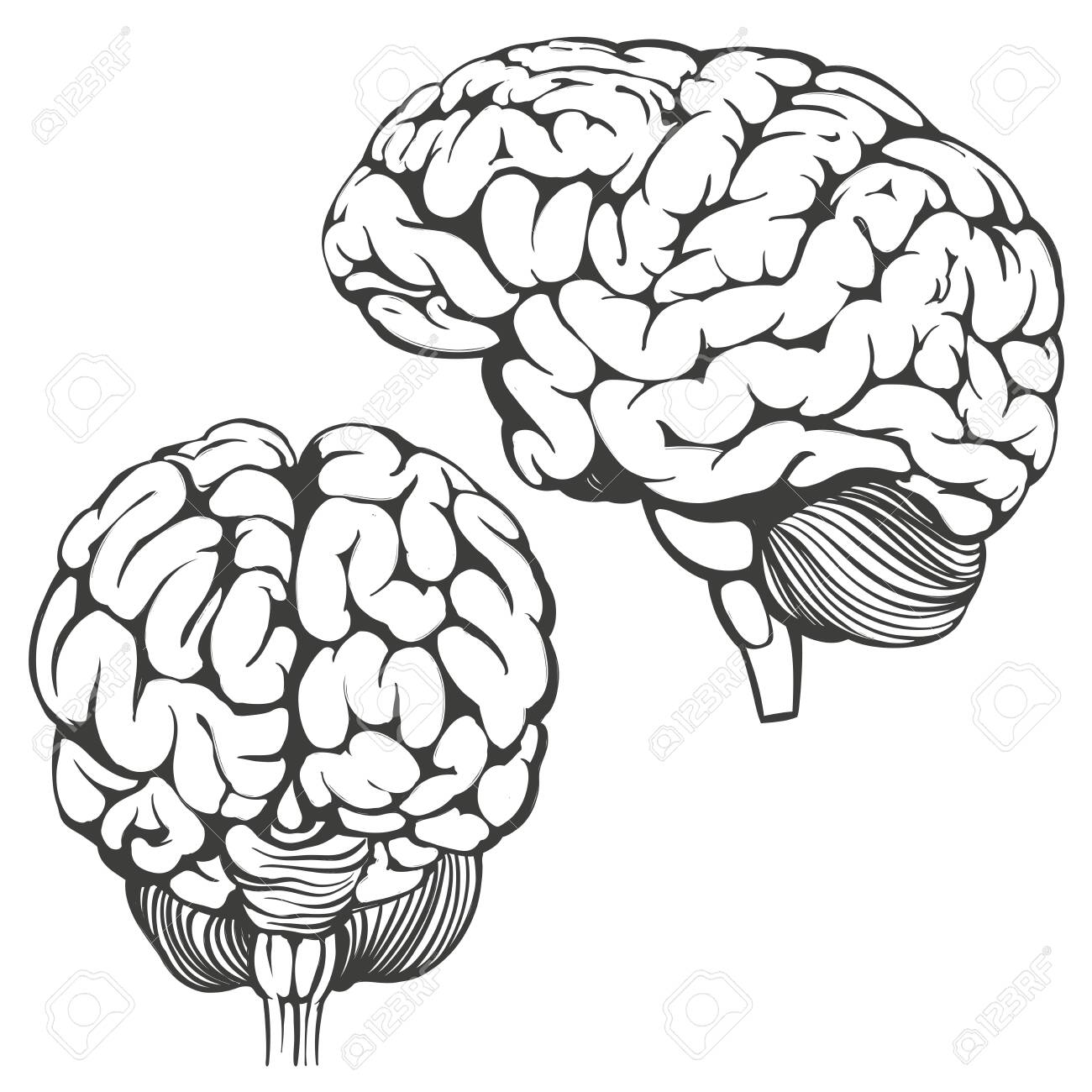 brains collection, human anatomy, icon cartoon hand drawn vector illustration sketch. - 143740124
