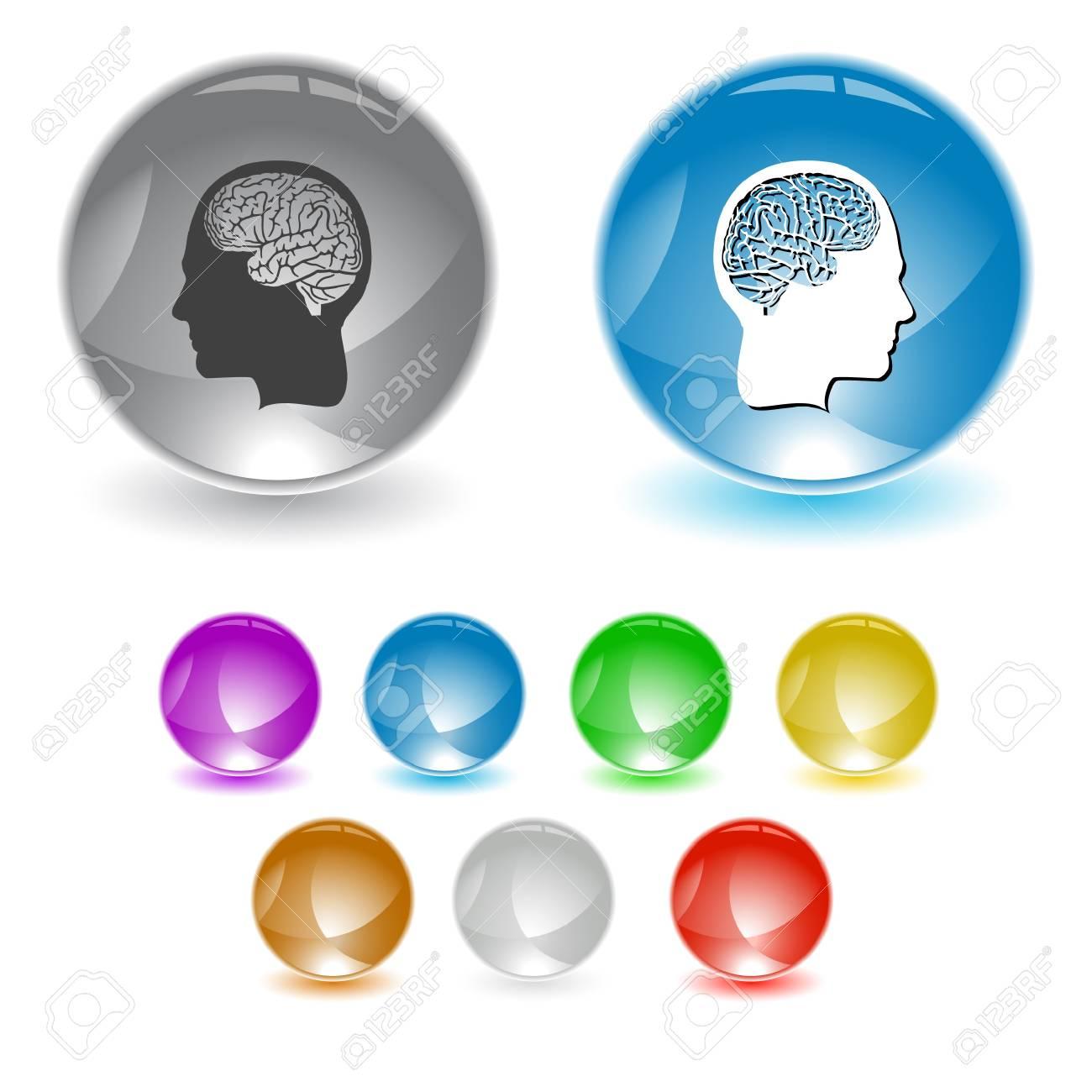 Human brain. interface element. Stock Photo - 18151727