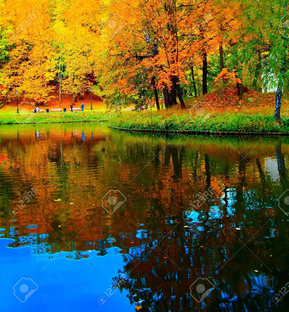 vivid forest near river Stock Photo - 8159704